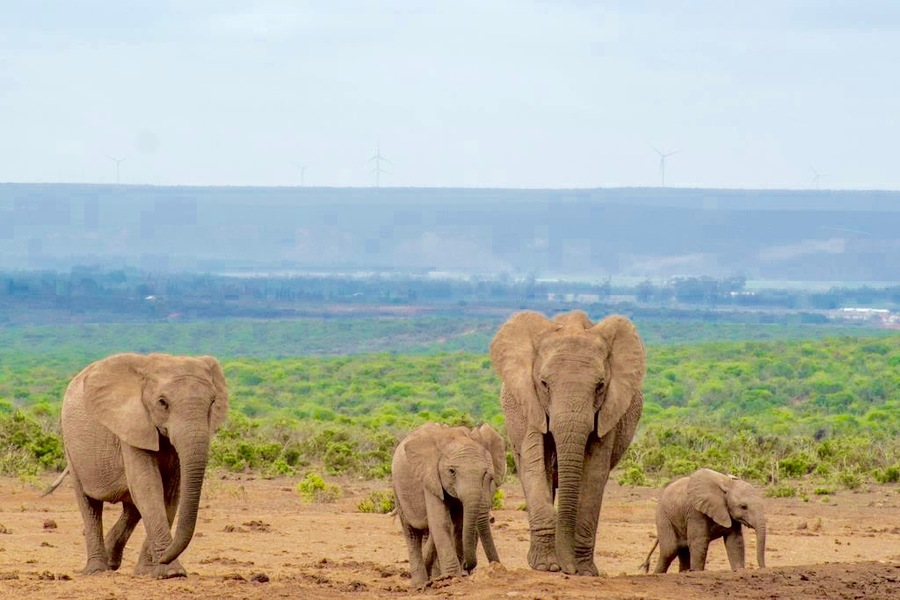 home exchange #1401: South Africa, Addo Elephant Park Area